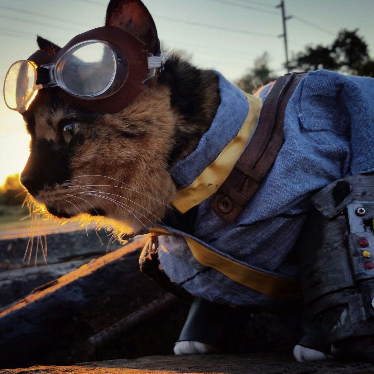 Wander cat 2